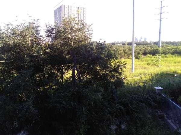 远洋天著一期花园南北别墅龙桂园游湖别墅如皋碧图片