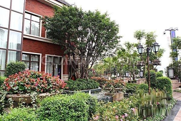 香河大门城法式二层庭院紧邻两大百亩主题公园v大门37%-室内图-10四两别墅半孔雀间别墅图片