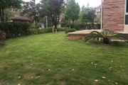 F、天下独栋别墅美景园占地面积600平 花园均带土地证-室内图-3